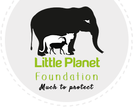 Little Planet Foundation