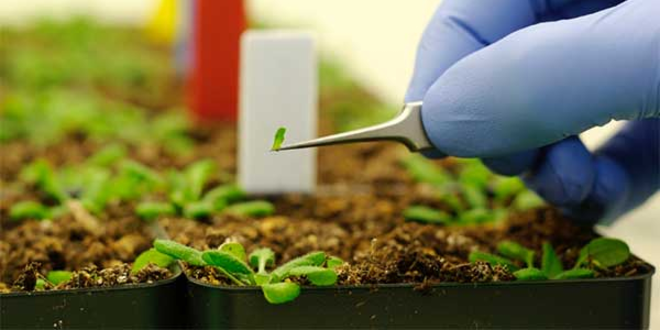 NOC: Nanotechnology in Agriculture