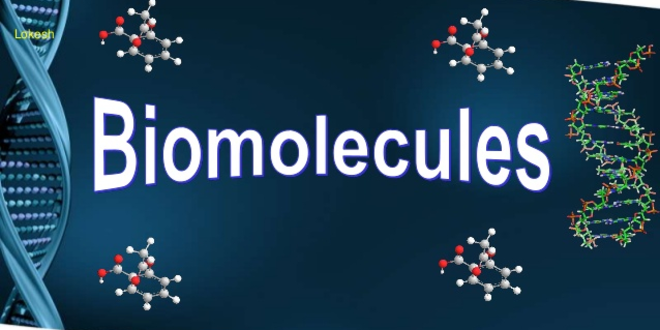 Structure and Functions of Biomolecules
