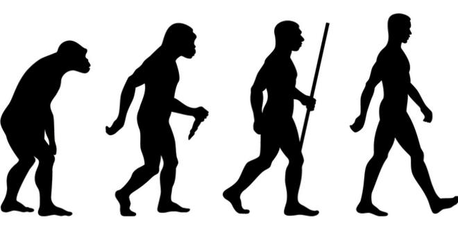 Evolution Theory & Quiz