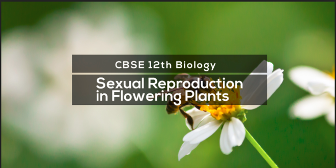 Sexual Reproduction in Flowering Plants Theory & Quiz.