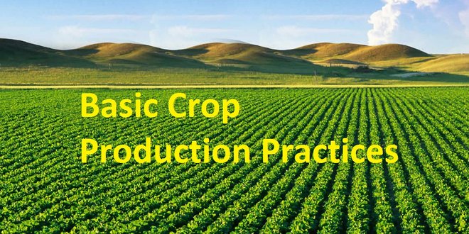 Basic Crop Production Practices (BCPP)