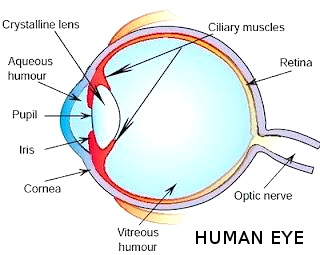 All About Human Eye - CBSE Class class 8 - Science  H...