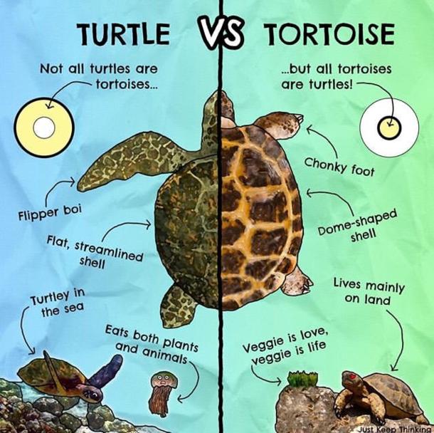 Turtle Vs. Tortoise