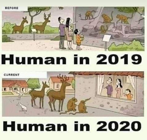 Human in 2020.