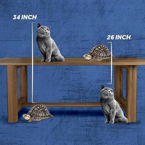 How tall is the table????