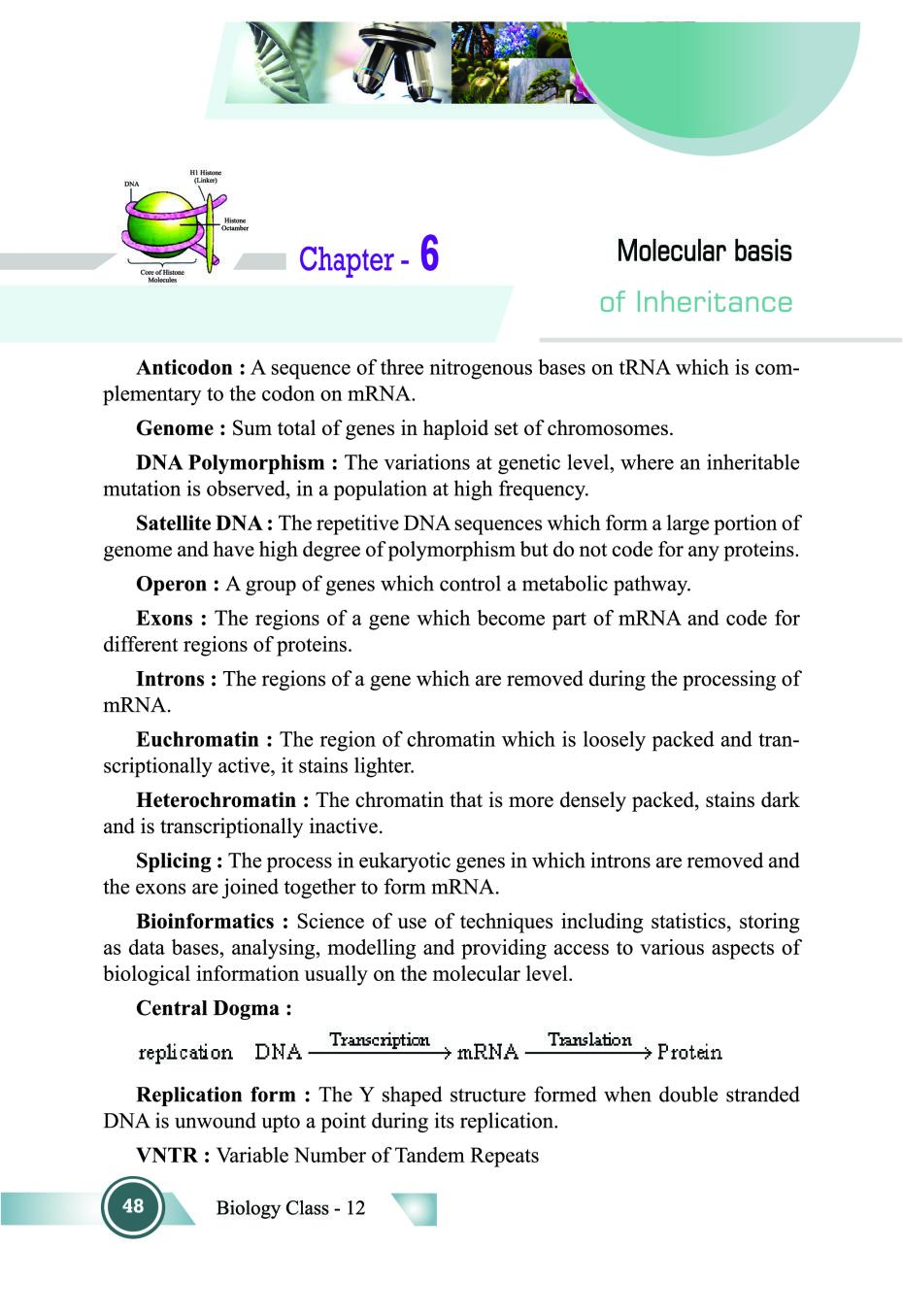 Class 12 Biology Notes for Molecular Basis of Inheritance