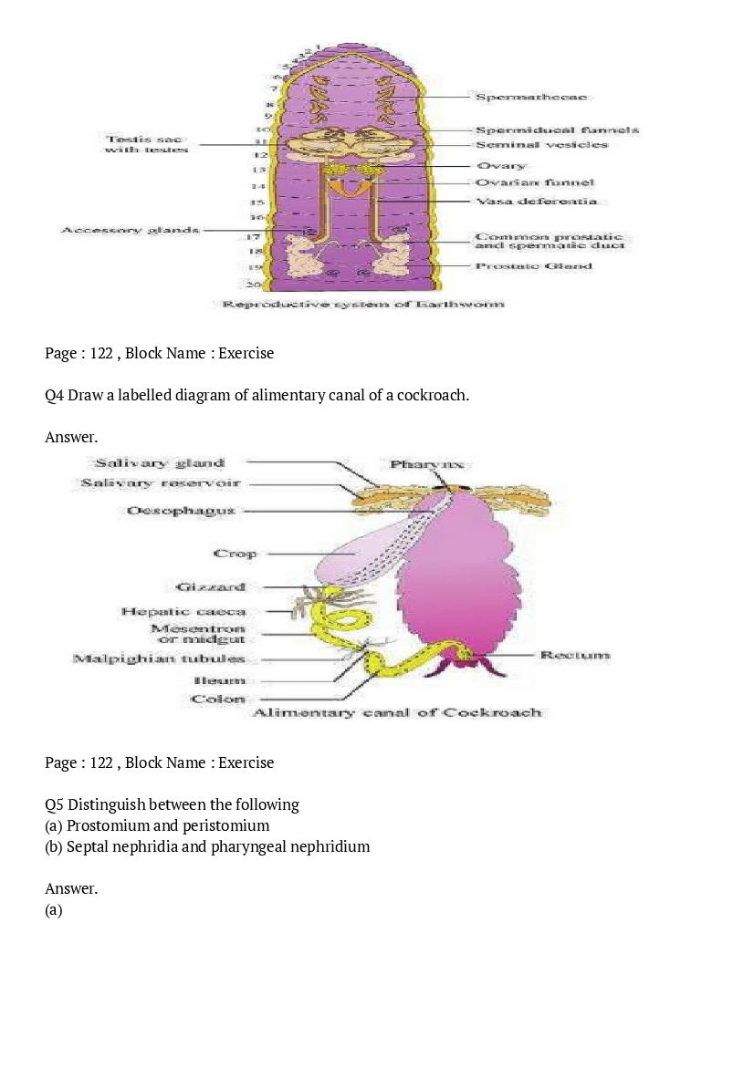 NCERT Solutions for Class 11 Biology Chapter 7 Structural