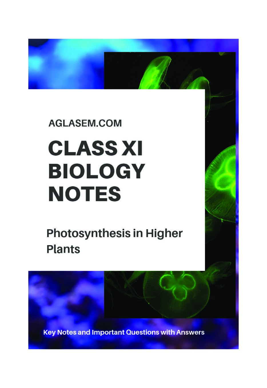 Class 11 Biology Notes for Photosynthesis in Higher Plants