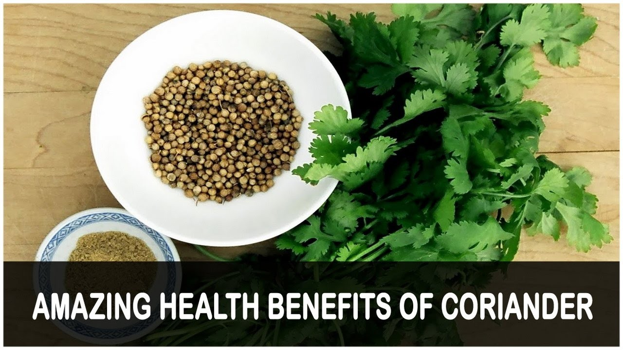 amazing heath benefits of eating coriander daily - article | atg