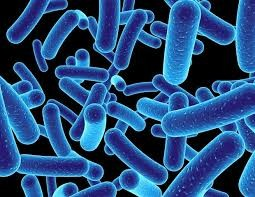 Scientists produce 3D chemical maps of single bacteria - Article | ATG