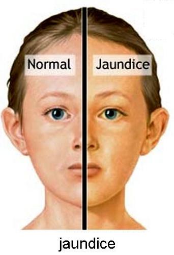 Hayat Naturo Ayurvedic Clinic_image8