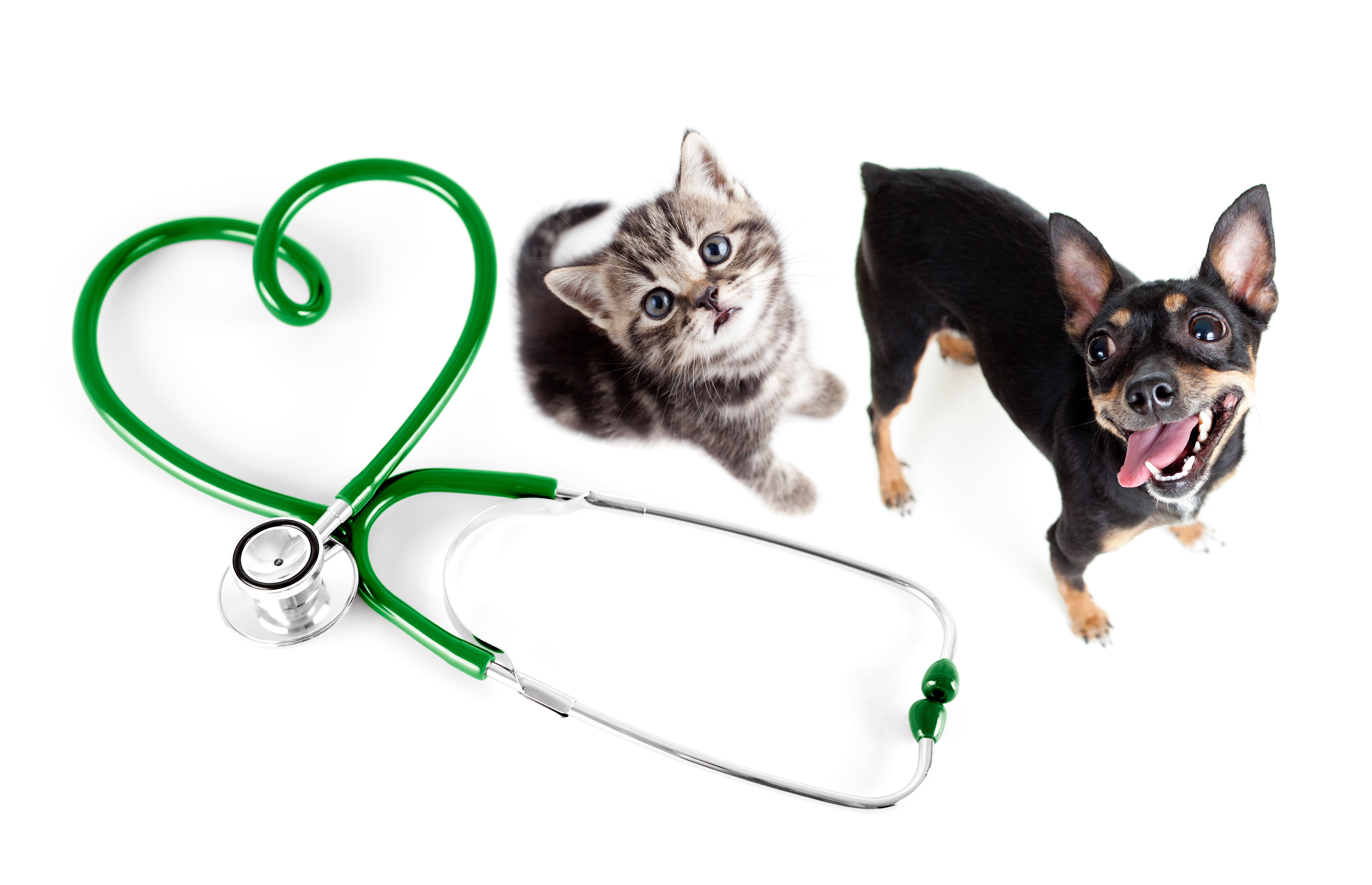 Nirmala Pet Clinic_image0