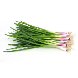 Spring Onion -1 Bunch