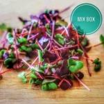 Mix box Micro green - 50 Gms