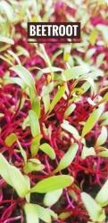Beet Root Micro green - 50 Gms