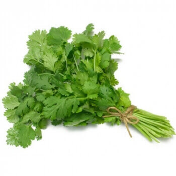 Coriander Leaves  -1 Bunch