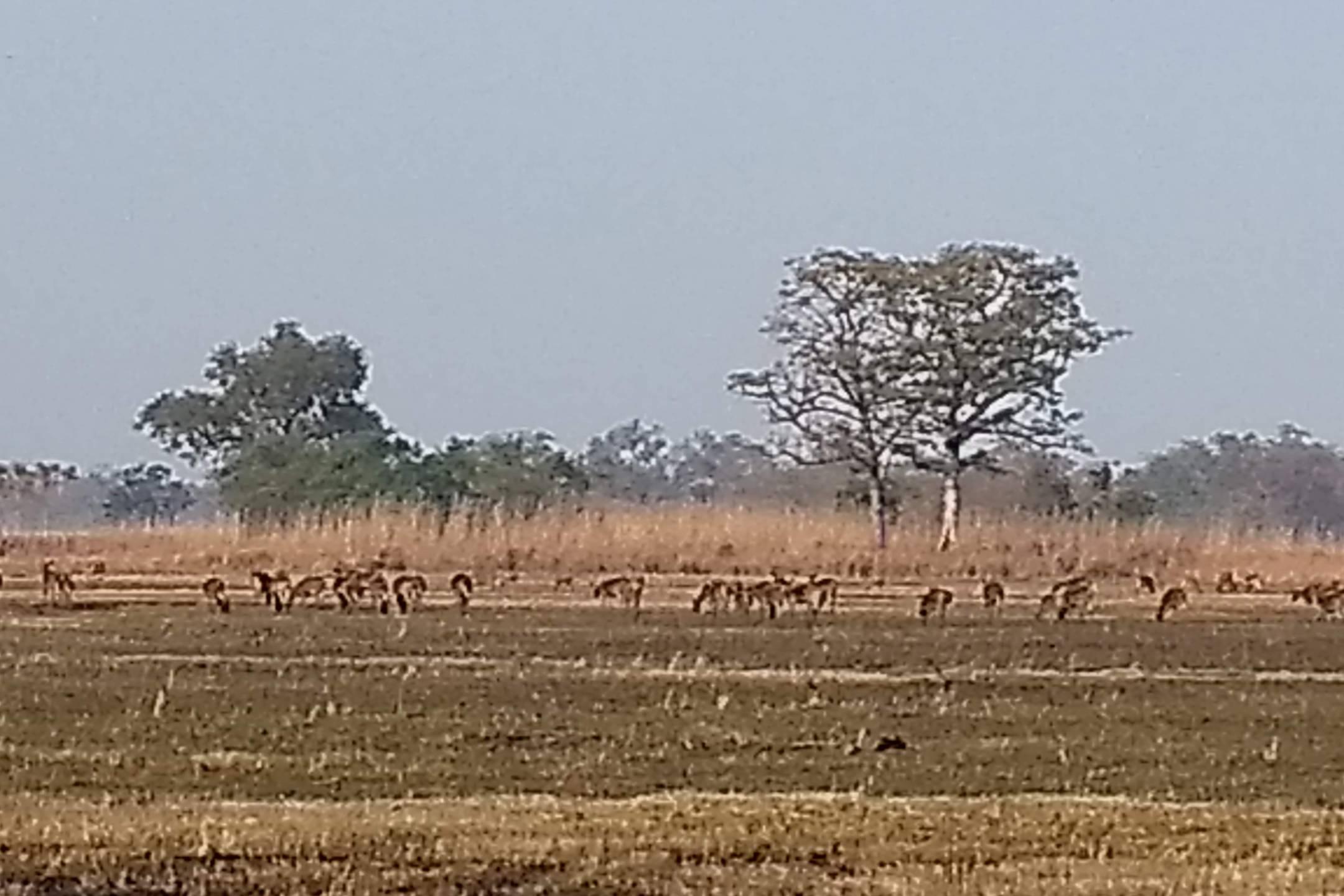Suklaphanta National Park next to Rana Tharu Community Homestay