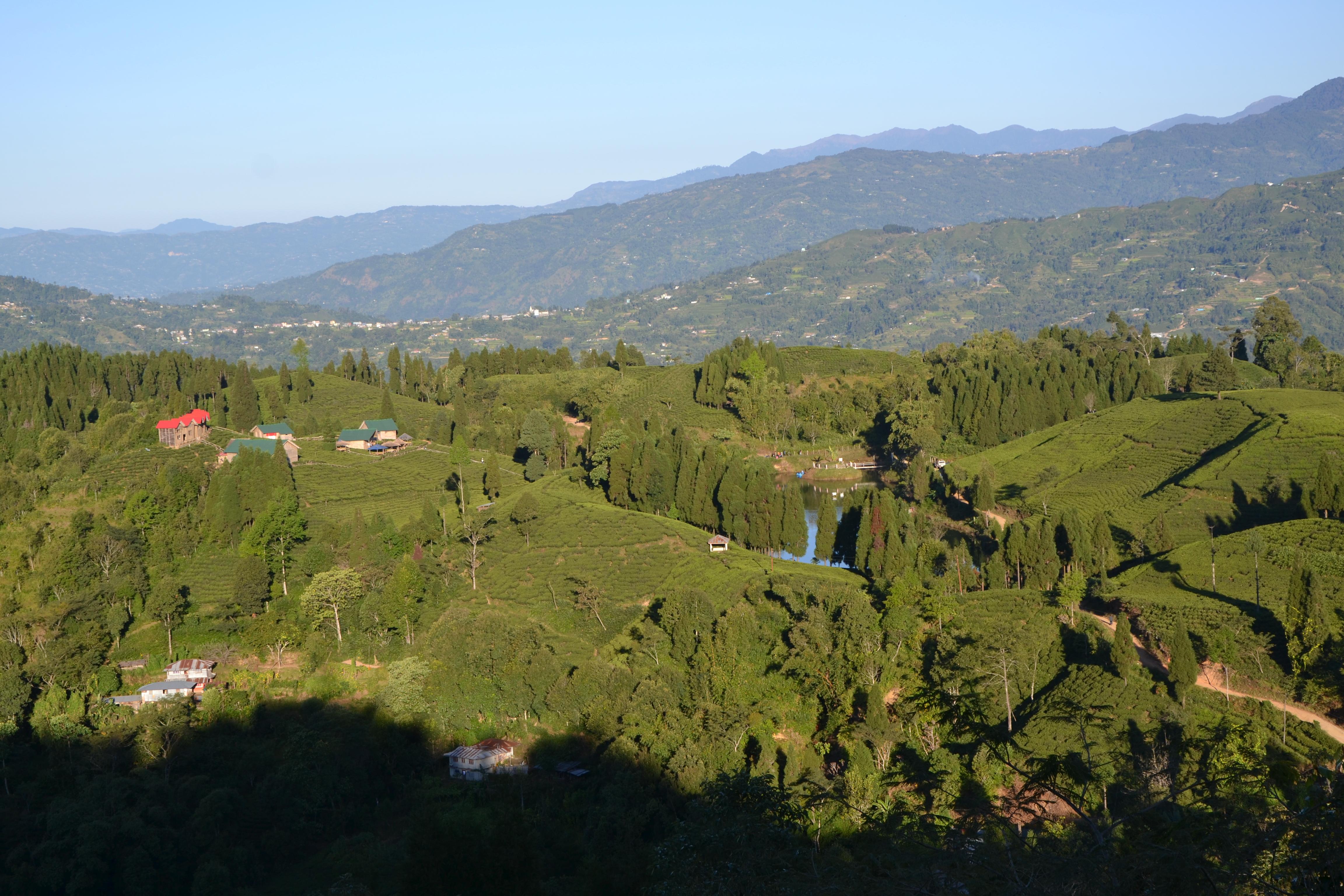 Tea Gardens Shree Antu