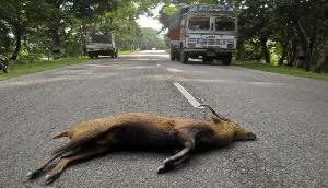असम: काजीरंगा नेशनल पार्क में तेज गति से वाहन चलाने पर 5 हजार जुर्माना
