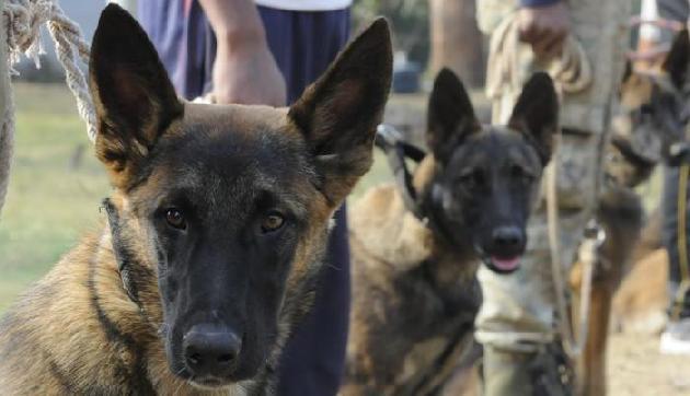 असम: व्हाइट हाउस की रक्षा करने वाले कुत्ते अब करेंगे काजीरंगा के राइनोस की रक्षा