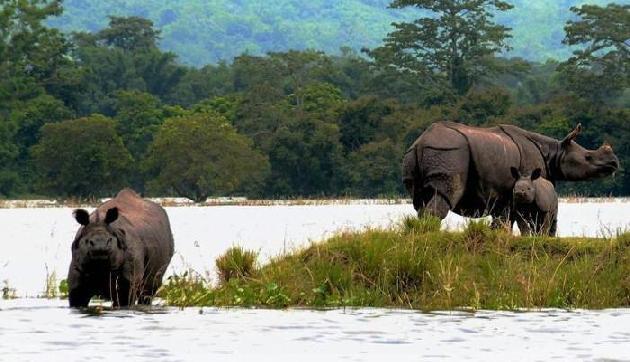 असम में पारदर्शी और वैज्ञानिक तरीके हुई है गैंडों की जनगणना: वन मंत्री