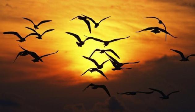 इस गांव मे आकर पक्षी कर लेते हैं सुसाइड, कारण जानकर रह जाएंगे दंग