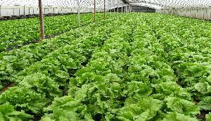 इंटरनेशनल जैविक कृषि कुंभ आज से शुरू, 110 देशों के 1400 प्रतिनिधि होंगे शामिल