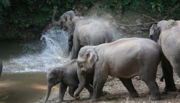 नहीं रुक रहा हाथियों का तांडव एक को कुचल कर मार डाला