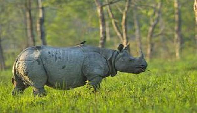 काजीरंगा में गैंडों की संख्या 2413, तीन साल में 12 बढ़े