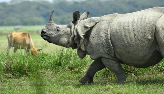 असम में नहीं रुक रहा गैंडों का शिकार, राज्यपाल ने मांगी सुरक्षा एजेंसियों की मदद