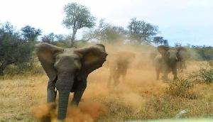 जंगली हाथियों का तांडव, घर ध्वस्त और फसल नष्ट की