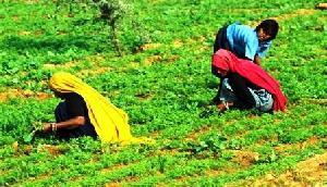 देश का दूसरा जैविक कृषि राज्य बनने को तैयार बिहार, सिक्किम के साथ हुआ एग्रिमेंट