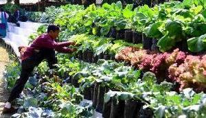 सिक्किम: विदेशी मेहमानों ने जाने जैविक खेती के गुर