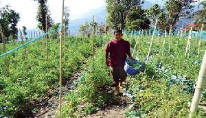 सिक्किम में 80,000 टन जैविक सब्जियों का उत्पादन
