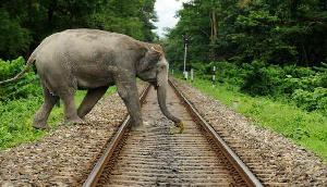 असम में ट्रेन से कटकर पांच हाथियों की दर्दनाक मौत