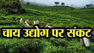 असम के चाय उद्योग से श्रमिकों का हो रहा मोहभंग