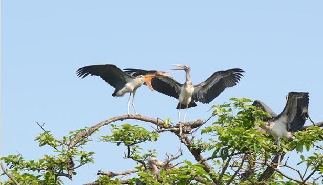 असम की पूर्णिमा पक्षियों के अंडे देने से पहले करती है गोद भराई की रस्म