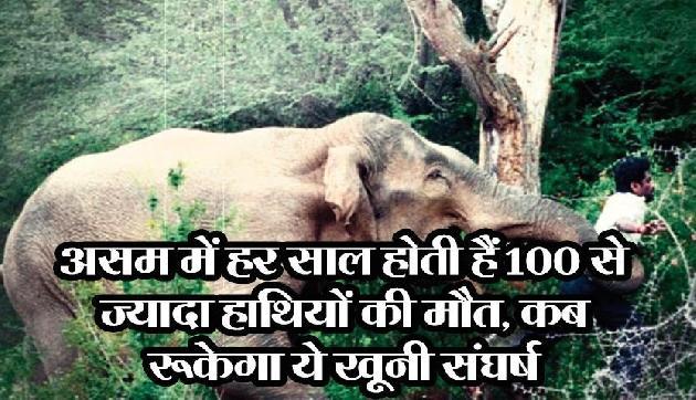 असम में हर साल होती हैं 100 से ज्यादा हाथियों की मौत, कब रुकेगा ये खूनी संघर्ष