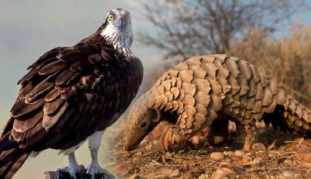 Manipur के  daniel जीवों-पक्षियों को लेकर जुनूनी, शिकार छोड़ने के बदले शिकारियों को दे देते हैं पैसे
