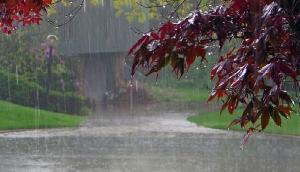 रिमझिम बारिश का मजा लेना है तो जरूर जाएं शिलांग की वादियों में