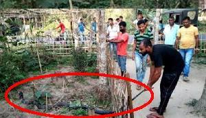 असम- किंग कोबरा से भिड़ने पहुंचे लोग...और फिर, देखें Viral वीडियो