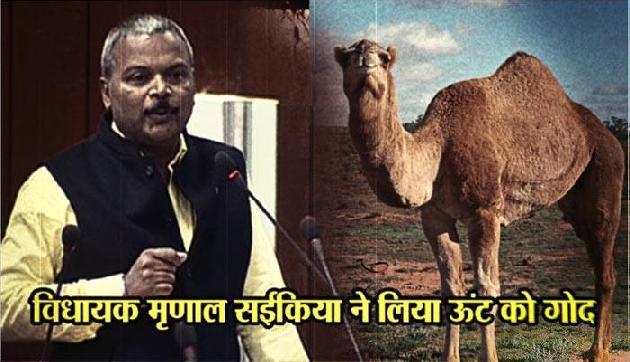 असम : 'रेगिस्तान के जहाज़' को गोद लेकर सुर्खियों में आए विधायक