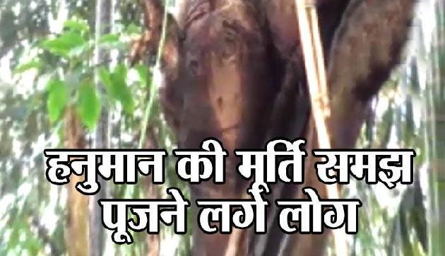 एक पेड़ में नजर आई आकृति, हनुमान की मूर्ति समझ पूजने लगे लोग