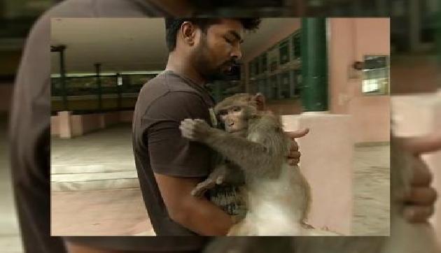 असम के युवक ने पेश की मिसाल, बंदर को बचाने के लिए लगा दी अपनी जान