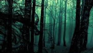 जंगल में पेड़ काट रहे शख्स को नजर आया कुछ ऐसा, मचा हड़कंप