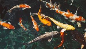 यहां मछली खाई तो लगेगा 10 लाख रुपए का जुर्माना, हो सकती है जेल
