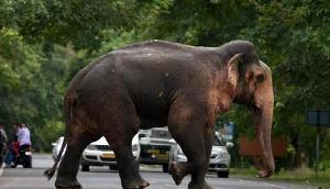 नहीं थम रहा हाथियों का उत्पात, ले ली 12 साल की लड़की की जान