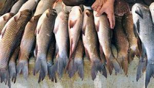 सावधान! मछली में जहरीला केमिकल, बिक्री पर लगी रोक, खाने से हो सकता है कैंसर