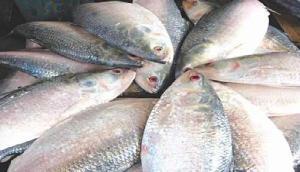 मछली में जहरीला केमिकल, इस  राज्य में बिक्री पर लगी रोक, खाने से हो सकता है कैंसर